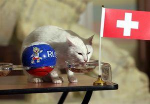 عکس/ پیشگویی آشیل از برنده بازی سوئد و سوئیس