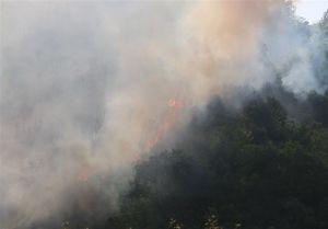 بازداشت متهمان حادثه آتشسوزی پارک ملی گلستان