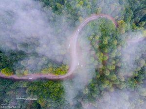 عکس/ رویاییترین جاده جنگلی ایران