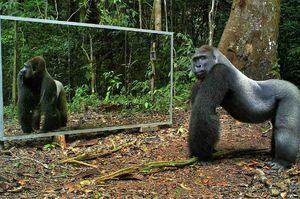 فیلم/ واکنش جالب حیوانات در برابر آینه!