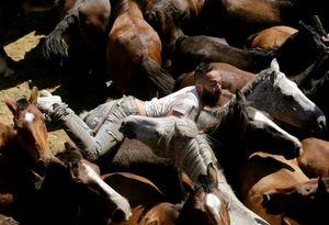 عکس/ مسابقه جدال با اسبهای وحشی !