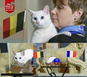 عکس/ پیشگویی آشیل از برنده بازی فرانسه و بلژیک