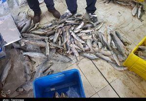 مضرات مصرف افراطی ماهی شور