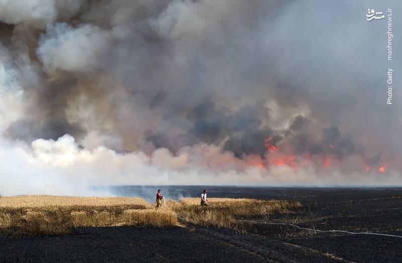 آتش به جان مزارع آلمان بر اثر خشکسالی و گرما