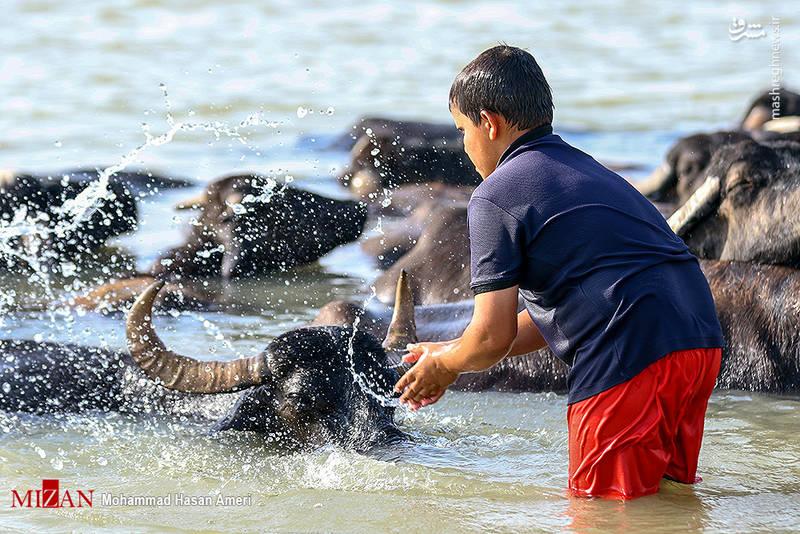 2293406 - تفریح تابستانه بچههای کارون