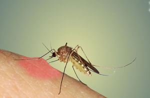 درمان های خانگی برای گزیدگی حشرات