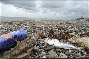 """فیلم/""""ساحلی"""" که تبدیل به زباله دانی شده!"""