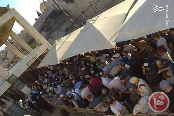 ورود غیرقانونی 1000 شهرکنشین به مسجدالاقصی