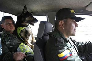 فیلم/ خط و نشان قاچاقچیان برای سگ پلیس!
