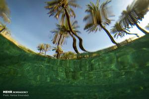 عکس/ جوشیدن چشمه از درون درخت