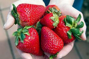 مصرف توت فرنگی و کاهش ابتلا به بیماریهای قلبی