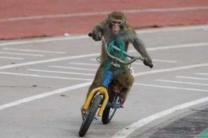 فیلم/ دوچرخه سواری جالب حیوان بازیگوش!