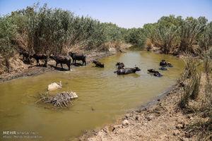 عکس/ خشک شدن تدریجی تالاب های خوزستان