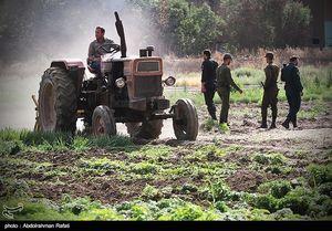 عکس/ امحای ۶ هکتار سبزی آلوده در همدان