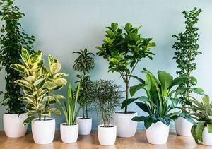 گیاهانی که اثرات روانی دارند