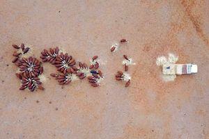 تصاویر هوایی از خشکسالی بیسابقه در استرالیا