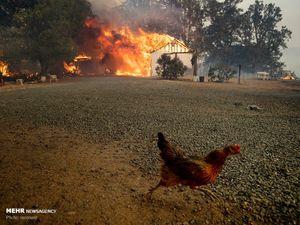 عکس/ حیوانات گرفتار در آتش سوزی های آمریکا