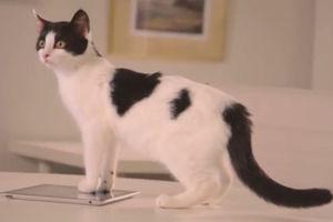 فیلم/ حضور گربه آقای کارشناس در گفتگوی زنده!