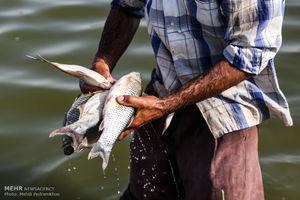 فیلم/ ریختن ماهیها از هواپیما به پایین!