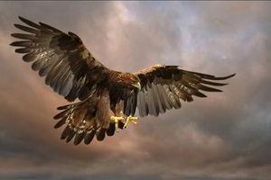 فیلم/ لحظه شکار یک مار توسط عقاب!