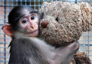 میمون بازیگوش به دام آتشنشانان افتاد +عکس