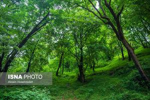 ایران زیباست؛ جنگل «قلعه رودخان»
