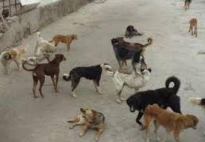 جمع آوری سگها