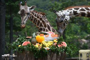 عکس/ لذت بردن حیوانات از فصل تابستان