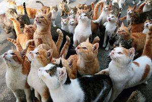 جزیره گربهها