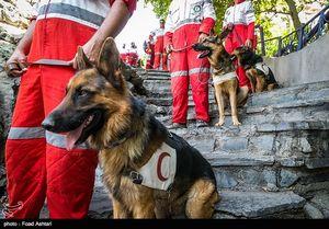 """عکس/ مانور سگهای زنده یاب در """"دربند"""""""