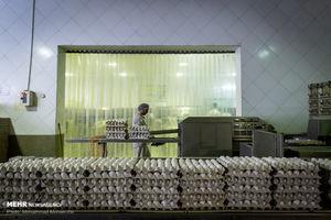 دردسر جدید تولیدکنندگان تخم مرغ