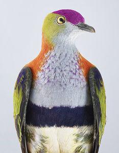 عکس/ کبوتران زیبا در آتلیه!