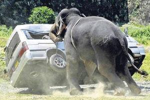 فیلم/ فرار گردشگران از دست فیل عصبانی!
