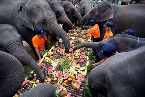 پذیرایی متفاوت از فیلها