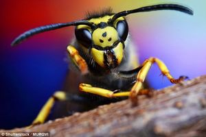 زنبورها توانایی تشخیص چهره دارند!