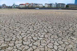 عکس/ موج گرما در اروپا رود راین را خشکاند
