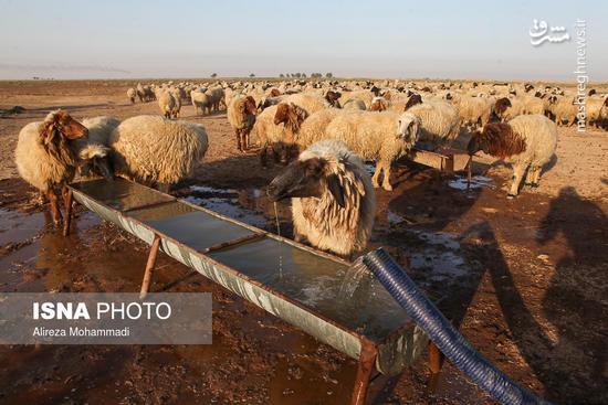 عکس/ بحران آب در هویزه