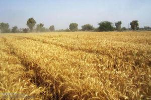 پوتین چگونه کشاورزی را تکیهگاه اقتصاد روسیه کرد؟