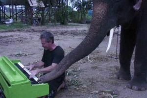 """فیلم/ وقتی یک """"فیل"""" پیانو می نوازد!"""