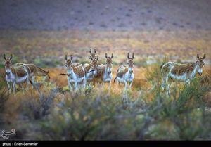 عکس/ گورهای ایرانی