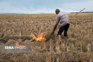 عکس/ مزارعی که به آتش کشیده میشوند