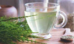 چای نمایه گیاه دم اسب