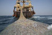 فیلم/ماجرای ماهیگیران چینی در دریای عمان!