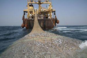 فیلم/ صید جالب ماهیگیران!