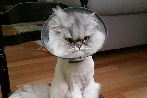 عکس/ اخموترین گربه جهان!