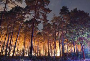 تشسوزی جنگلی در نزدیکی برلین