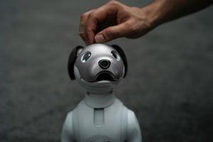 سونی، ربات خانگی Aibo را روانه بازار میکند +عکس