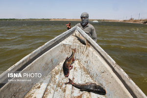 عکس/ مرگ ماهیهای خوزستان
