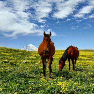 چشم اندازی زیبا از قله کوه پر شکوه دماوند از روستای توریستی الیمستان آمل