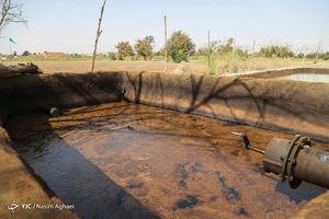عکس/ نشت نفت در مزارع جنوب تهران